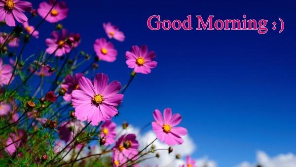 Amazing Good Morning -mn1-wm13003