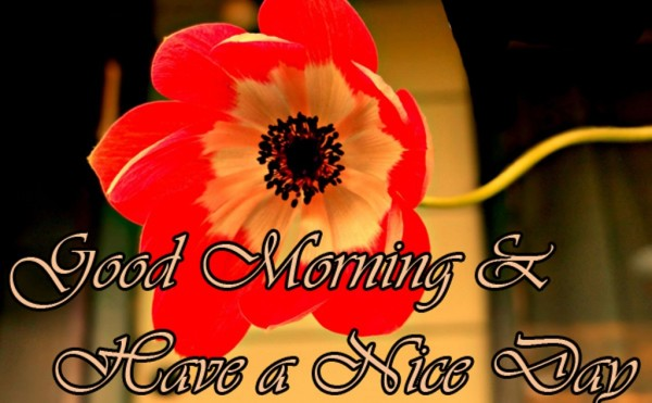 Good Morning And Have A Nice Day !-wm13027