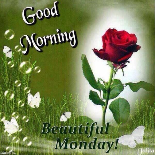 Good Morning-Beautiful Monday-wm221
