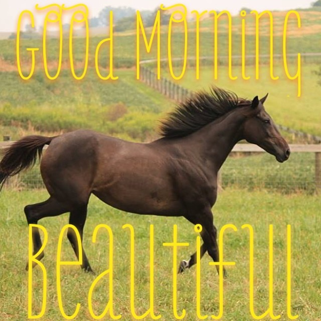 Good Morning Wishes With Horse Pictures, Images