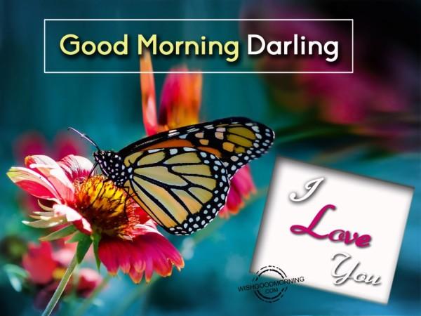 Good Morning Darling !
