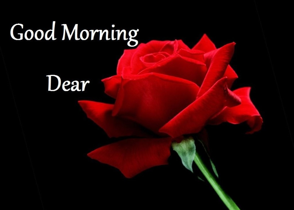 Good Morning Amore Mio : Good morning wishes with flowers pictures images page