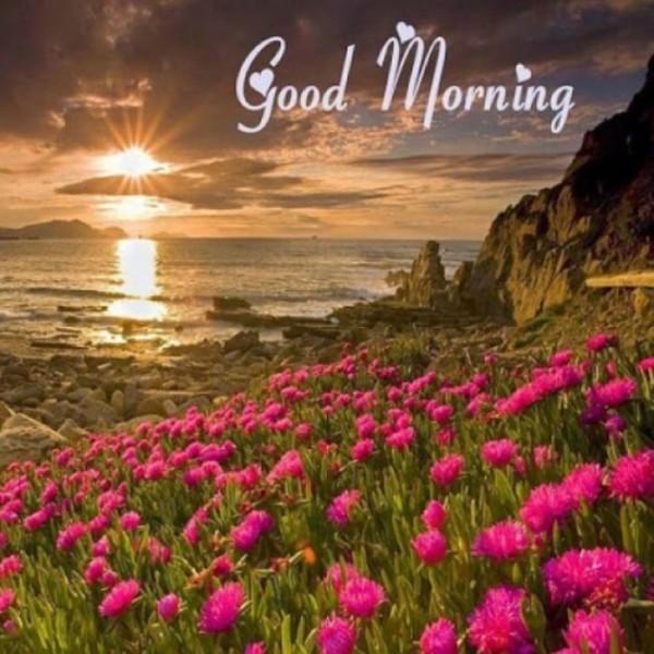 Good Morning Flowers Image-wm13031