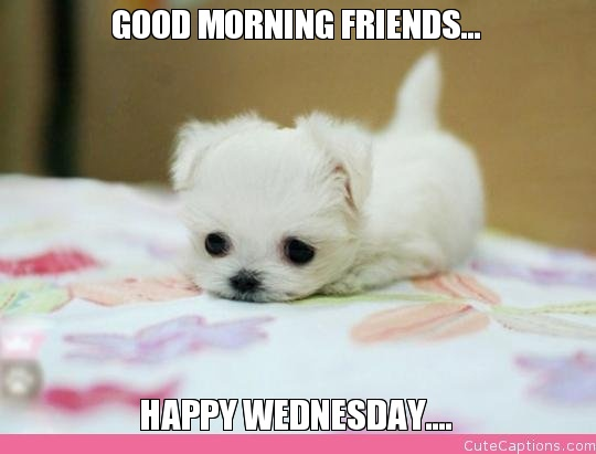 Good Morning Friends Happy Wednesday-wm806