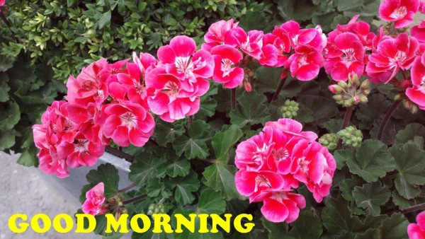 Good Morning Have A Beautiful Day-wm13033