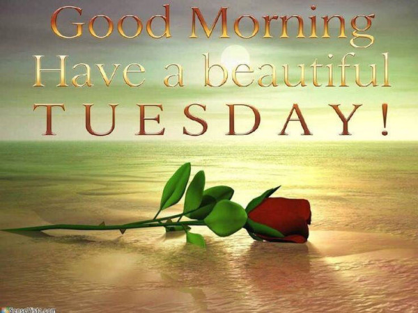 Good Morning Have A Beautiful Tuesday-wm713