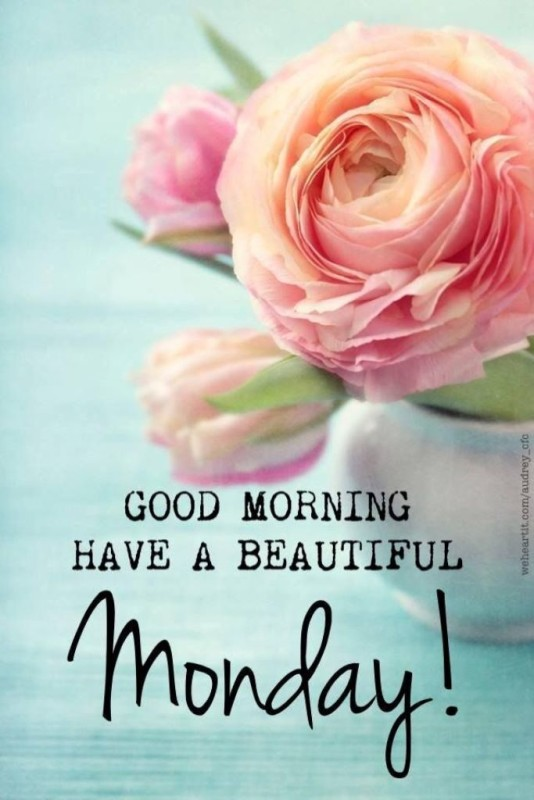 Good Morning Have A Beautiful onday-wm13034