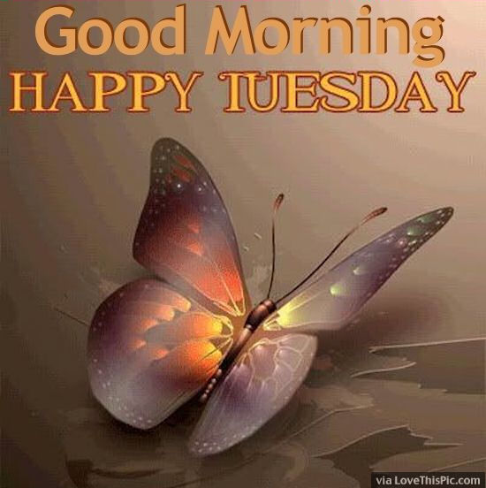 Good Morning Have A Happy Tuesday-wm719