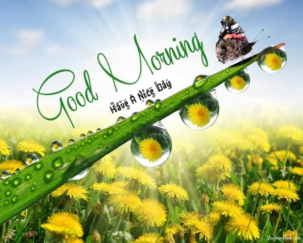 Good Morning Have A Nice Day Ahead-wm13040