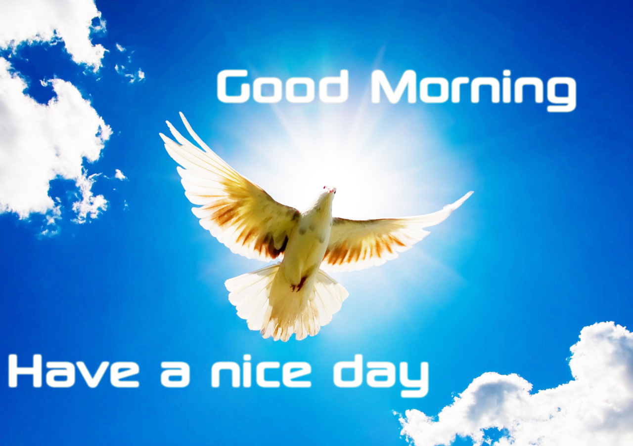 Good Morning Friends Have A Nice Day Images : Good morning friends have a nice day hd pixshark