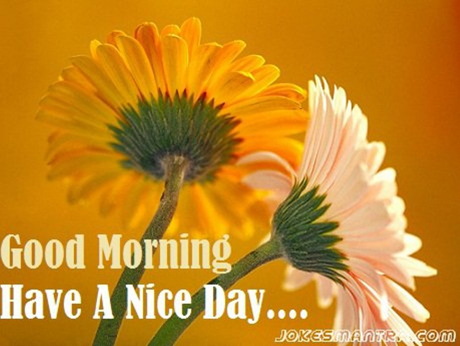 Good Morning Have A Nice Day Images Hd Archidev