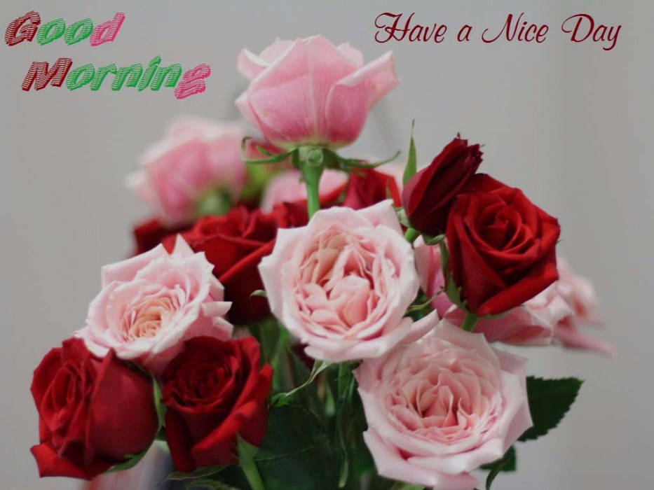 Good Morning Wishes With Flowers Pictures Images Page 83