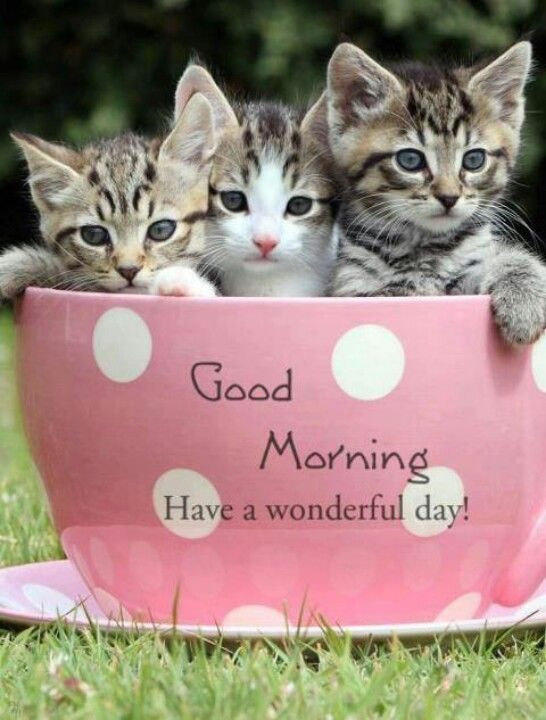 Good Morning Have A Wonderful Day-wm1113