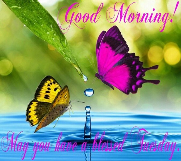 Good Morning May You Have A Blessed Tuesday-wm721