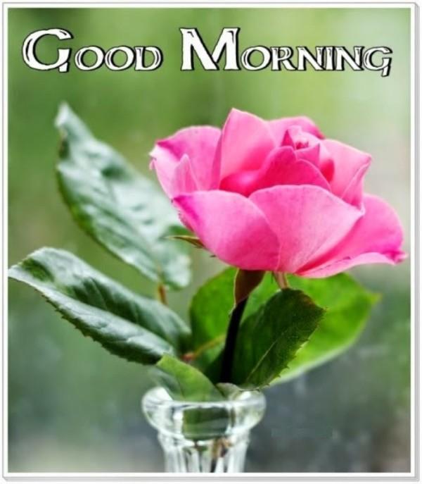 Good Morning - Pink Rose Photo-wm13024