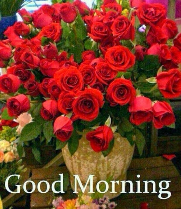 Good Morning Wish To You-wm13058