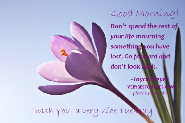 Good Morning Wish You A Very Nice Tuesday-wm725