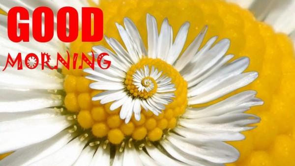 Good Morning Wish !-wm13057