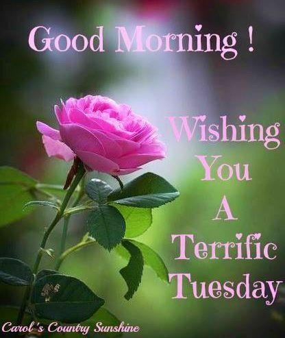 Good Morning Wishing You A Terrific Tuesday-wm726