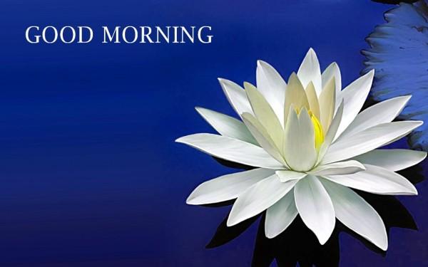Good Morning With Amazing Lotus-wm13064