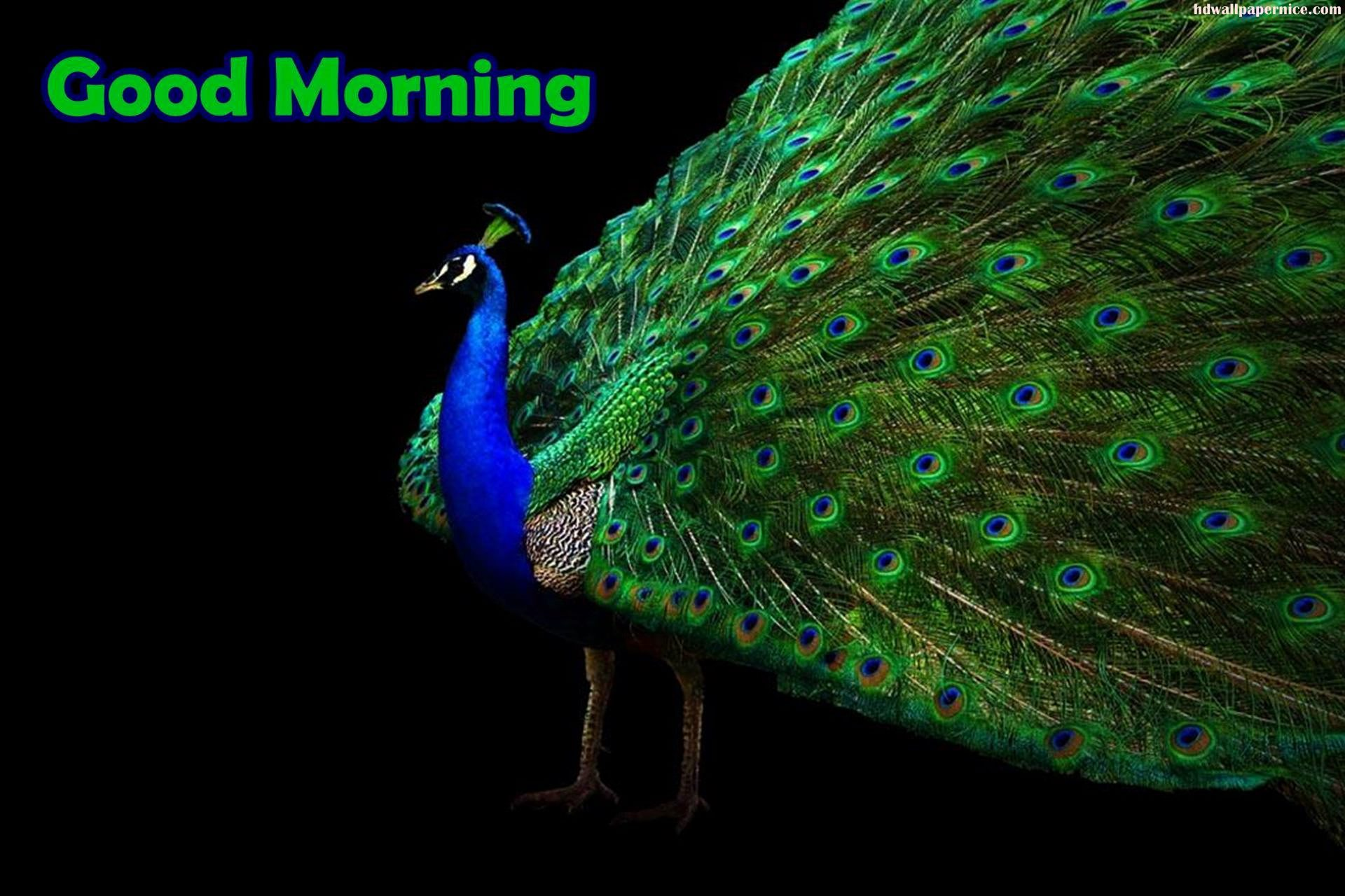 Good Morning Beautiful Photos Download : Good morning wishes with birds pictures images page