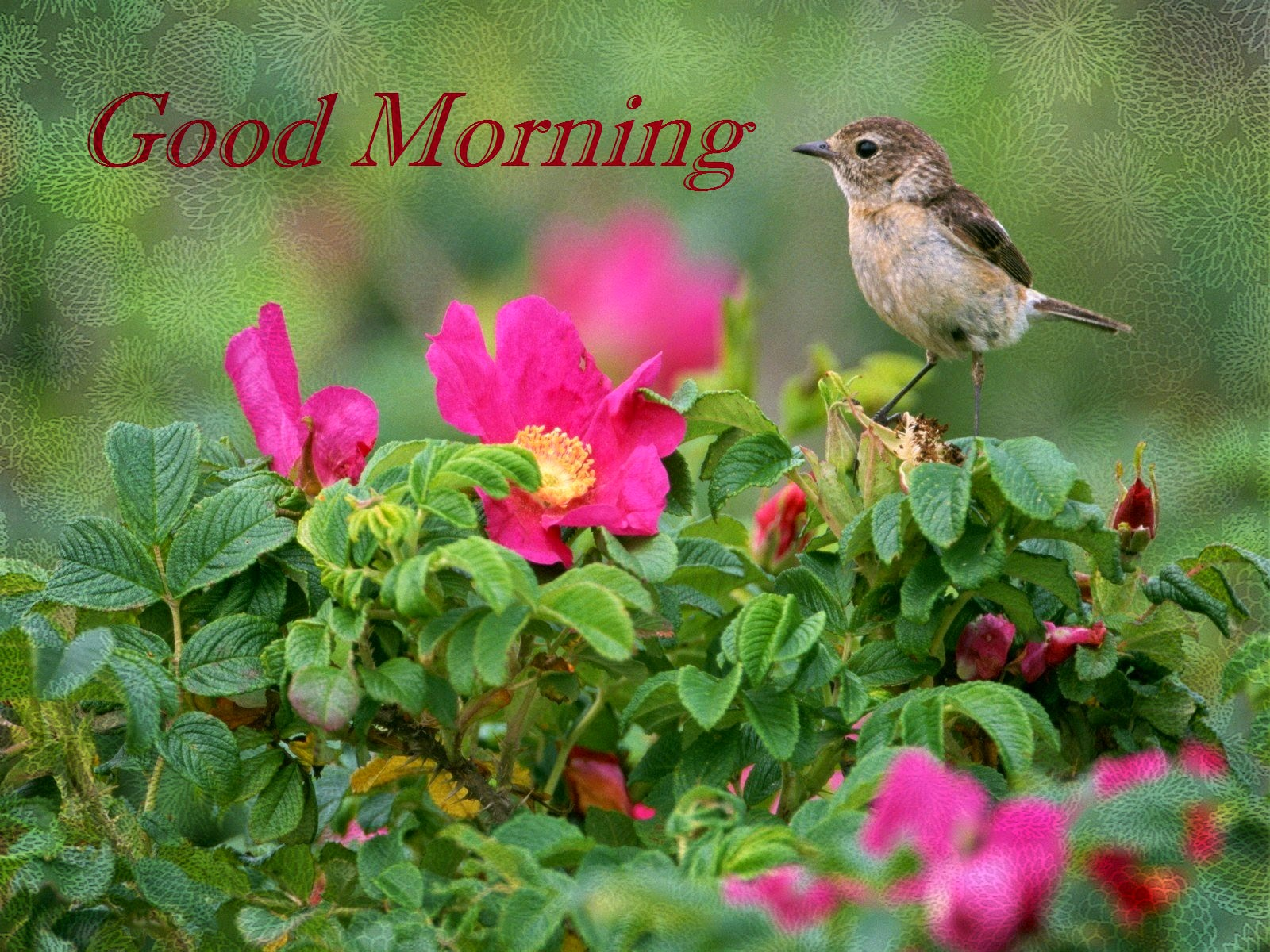 Love Birds Good Morning Wallpaper : Good Morning Wishes With Birds Pictures, Images - Page 23
