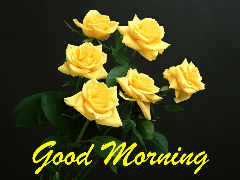 Good Morning With Bunch Of Yellow Roses