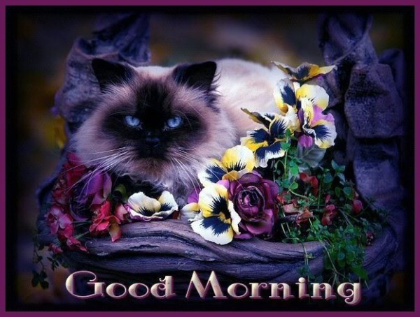 Good Morning With Cat-wm1125