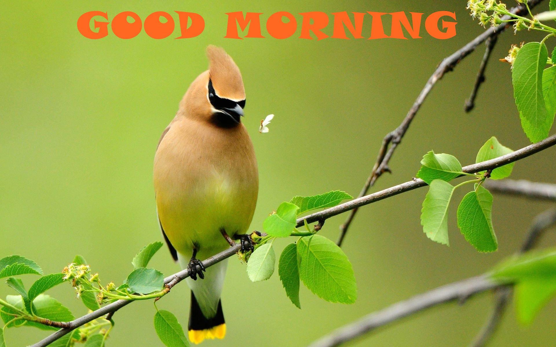 Птицы на ветке  № 1652618 без смс