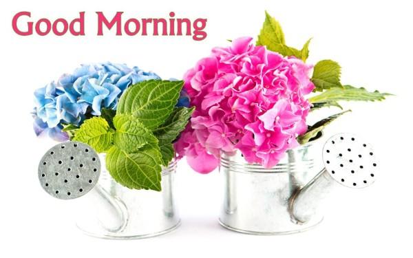 Good Morning With Hydrangea Flowers-wm13074