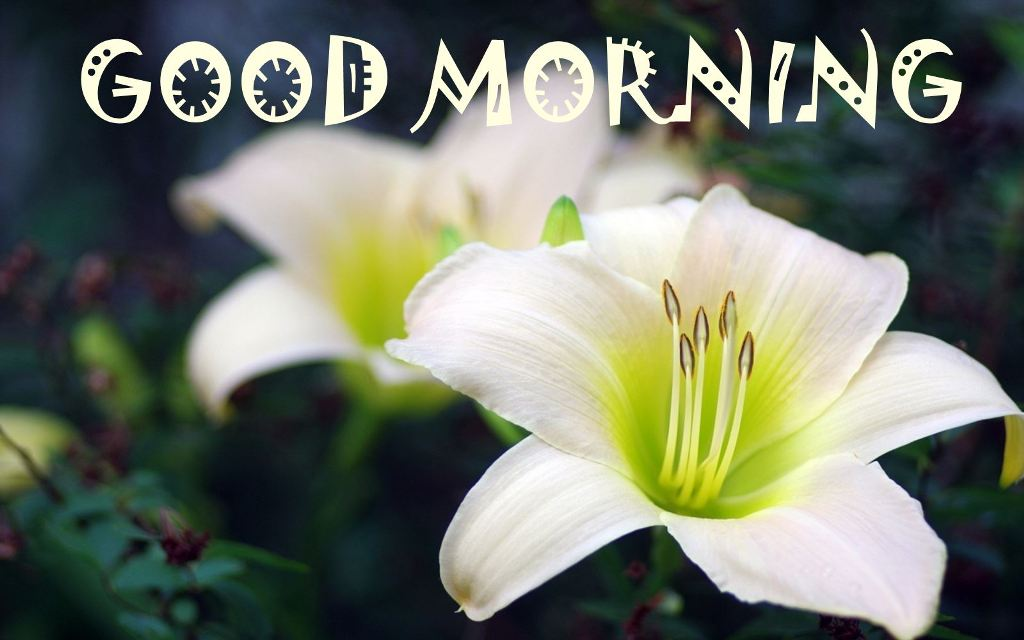 Good Morning With Lily Flower