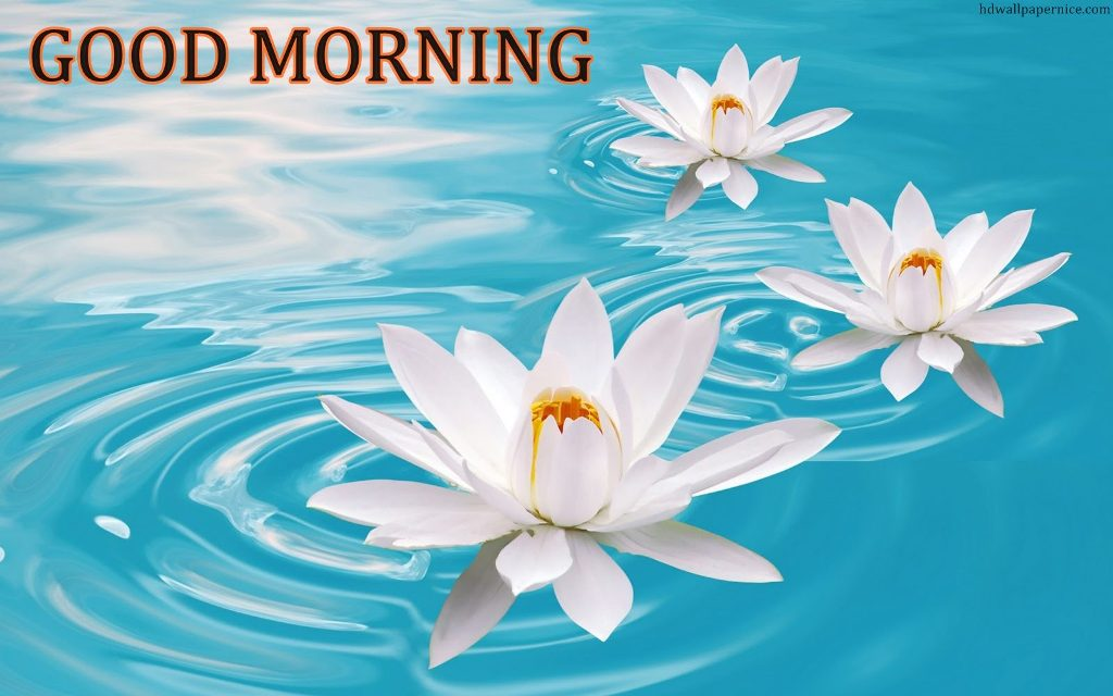 Good Morning With Lotus