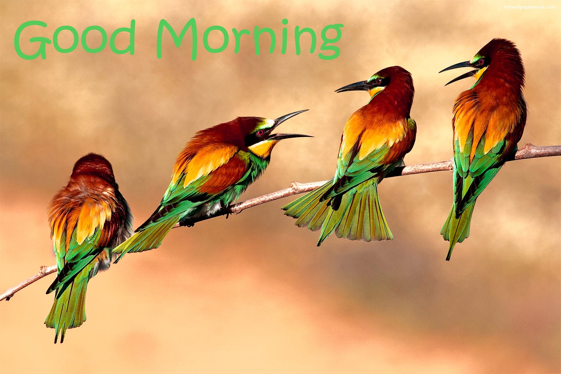 Good Morning Wishes With Birds Pictures Images Page 16