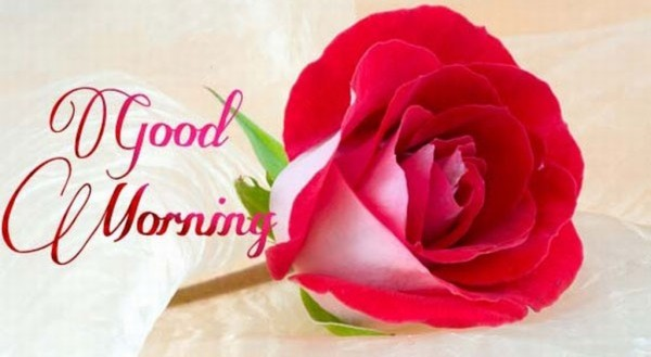 Good Morning With Lovely Rose-wm13080