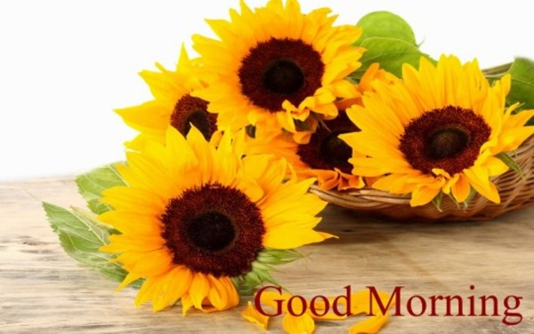 Good Morning With Lovely Sunflowers-wm13081