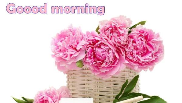 Good Morning With Peony Flowers-wm13082