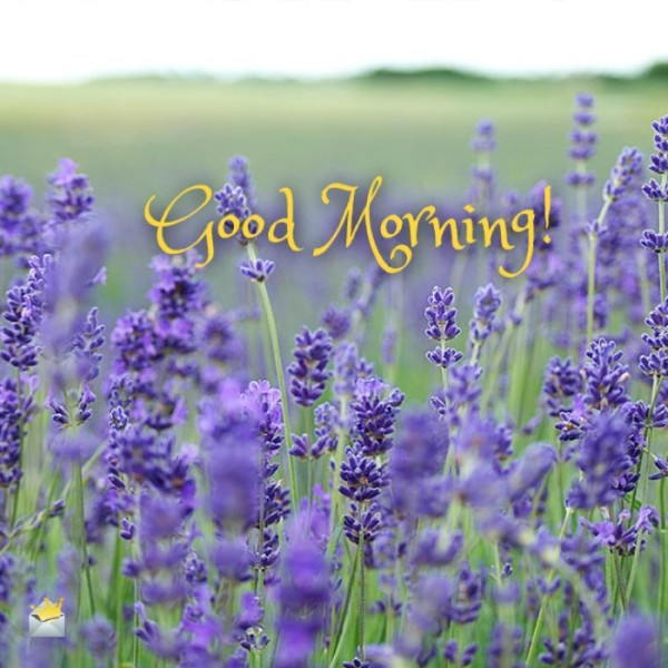 Good Morning With Purple Flowers !-wm13088