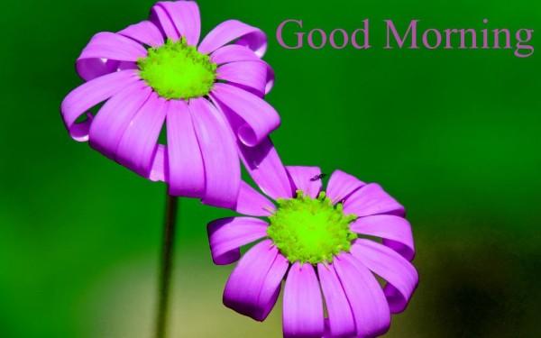 Good Morning With Purple Flowers-wm13089