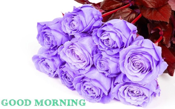 Good Morning With Rose Bouquet-wm13094