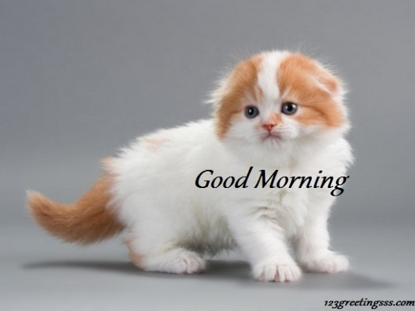 Good Morning With Sweet Kitty