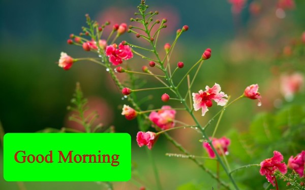 Good Morning With Sweet red Flowers-wm13098