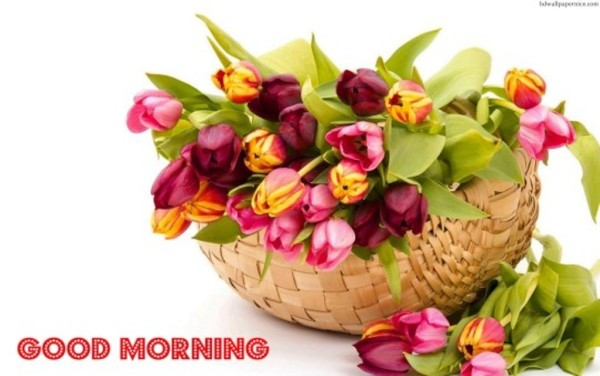 Good Morning With Tupil Flowers-wm13099