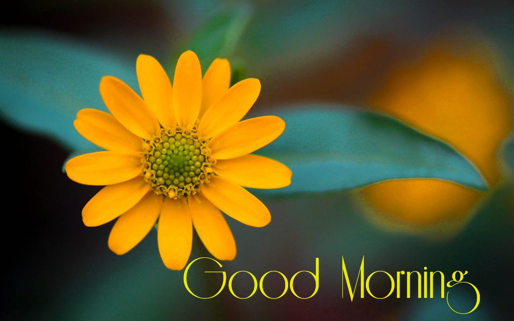 images of good morning wishes with flowers
