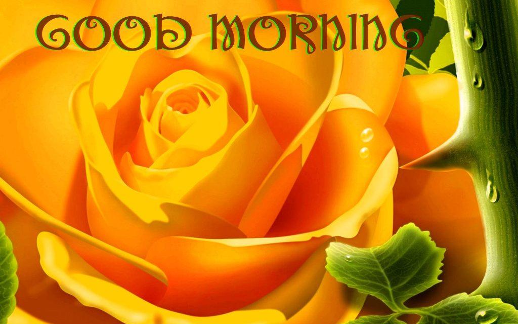Good morning with yellow rose - Good morning rose image ...