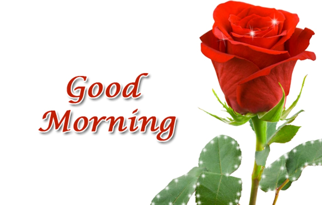 Good Morning Beautiful Red Rose Image : Good morning wishes with flowers pictures images page