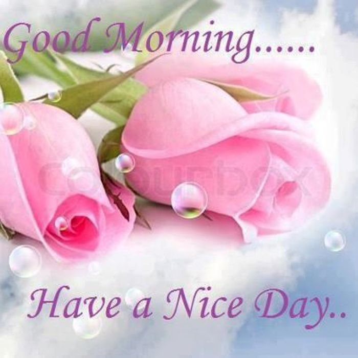 Good Morning Have A Great Day : Have a nice day guys good morning