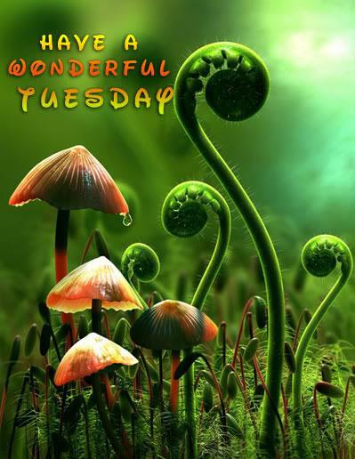 Have A Wonderful Tuesday-wm736