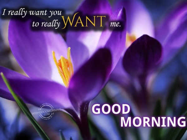 I Really Want You Good Morning