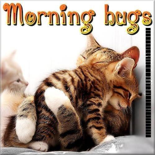 Morning Hugs-wm1143