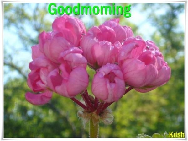 Sending Fresh Flowers For Morning-wm13128